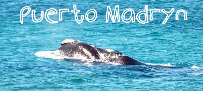 Puerto Madryn: Ballenas y Hospitalidad